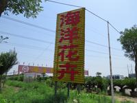 淄博花卉,淄博风水花卉,淄博春节花卉,淄博花卉市场