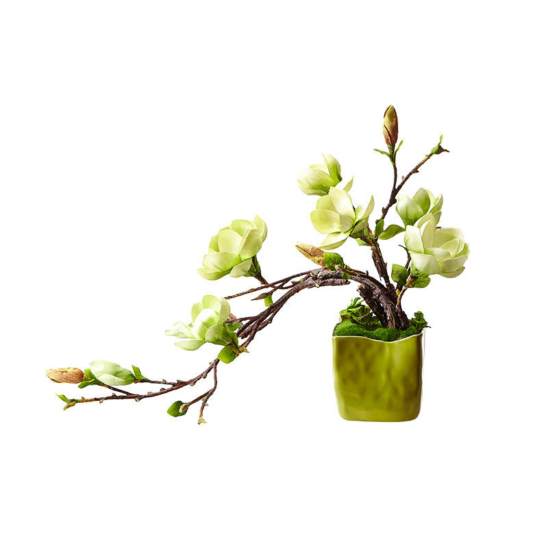 盆栽玉兰,花百科