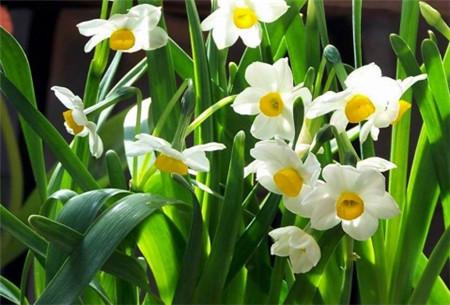 兰花的美称是什么图片