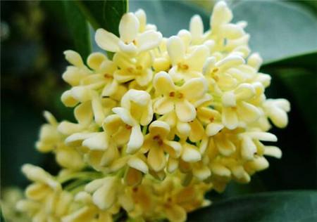 各种花的美称图片