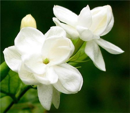 牡丹花的美称图片