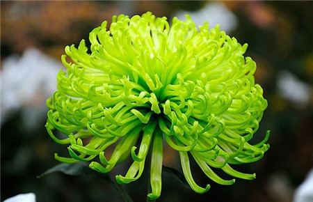 水仙花的美称图片