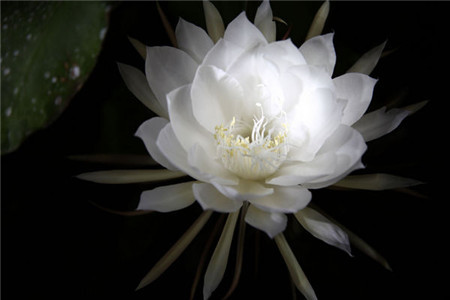 蔷薇的美称图片