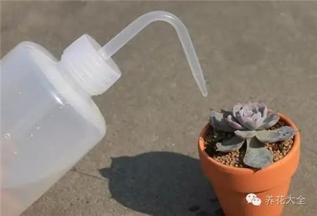 给植物根部浇少量水
