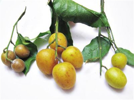 带叶的黄皮果
