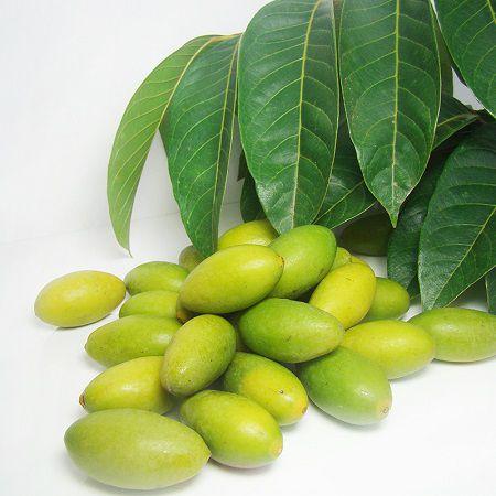 青橄榄果实