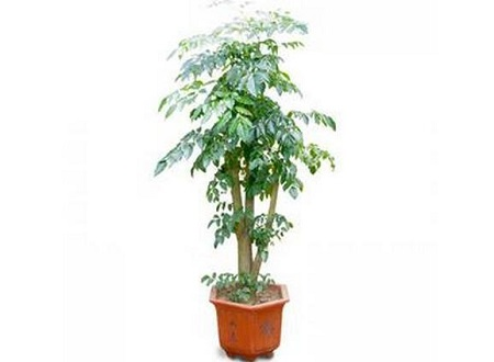 漂亮的绿宝树