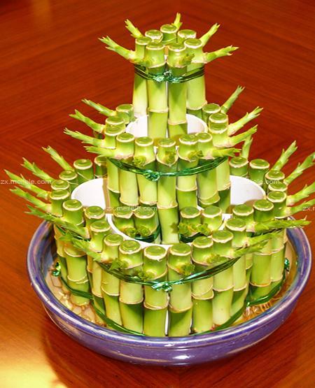 漂亮的富贵竹
