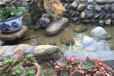 临时小池塘
