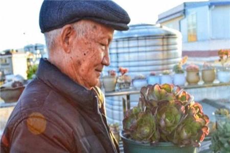 养花的老爸