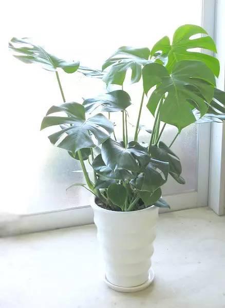 室内吉祥风水花卉,41种常见花卉植物的风水寓意