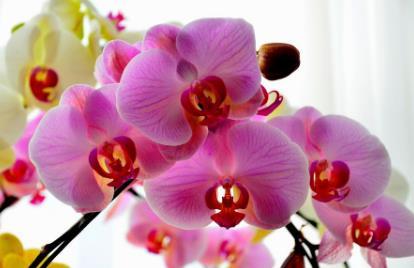 风水花卉蝴蝶兰与家居