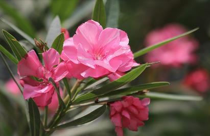风水花卉网:九类办公室内不宜植物