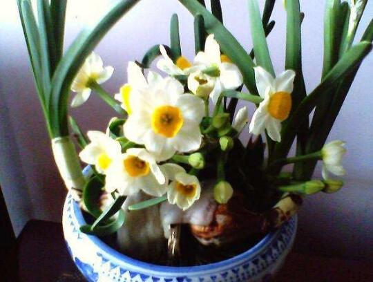 室内花卉风水,十大改善住宅风水的花卉