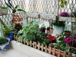 阳台种菜之根据朝向选择蔬菜