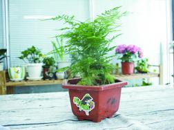 家里放什么植物最旺财,带来美好的寓意(8种植物)