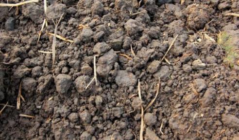 养花的万能土壤配方