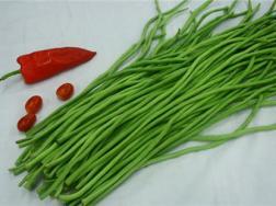 豇豆的阳台种植方法
