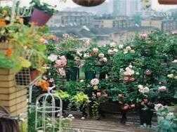 她把租来的房子,建成大花园,生活再累也要取悦自己!
