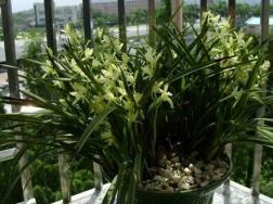兰花使用什么肥料好,兰花平时用什么