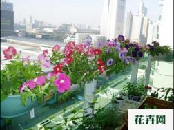 家庭养花的常见品种有