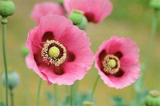 冥界四花都有哪四种花