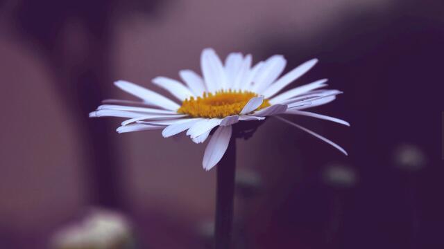 代表希望的花