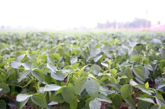 马拉硫磷治什么害虫