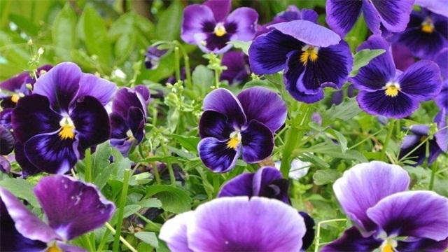 花朵名称大全