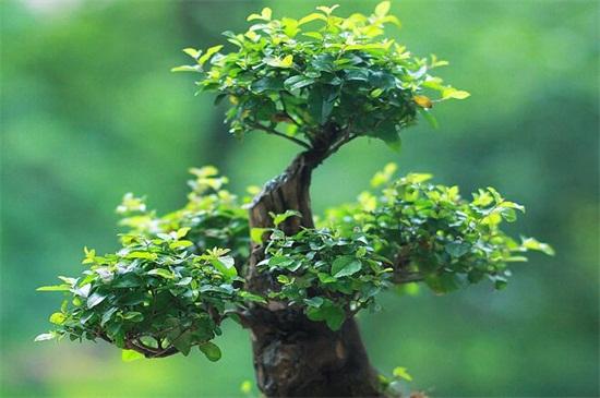 喜阴植物适合室内种植