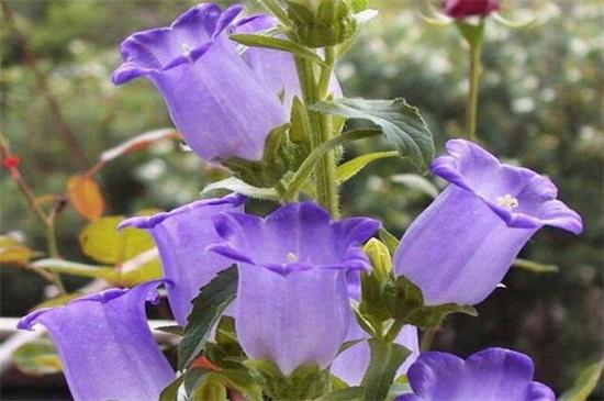阳台种什么花