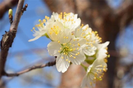 中国国花是什么花