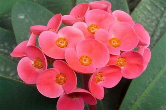 一年四季都盛开的花是什么花