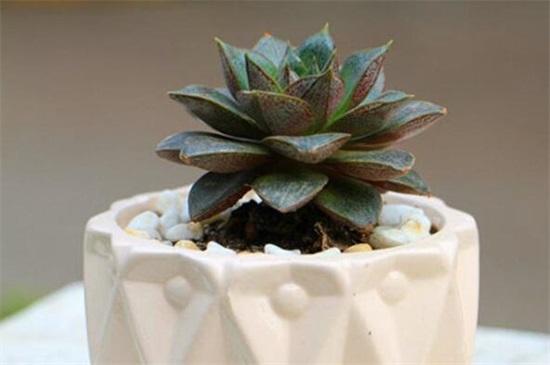 珍珠岩种花有什么好处,稳定性强/吸水性好/防止土壤板结