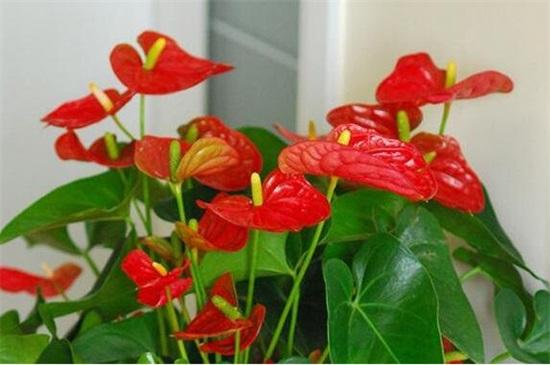 一年四季都开花的盆栽,盘点十种全年花期的植物