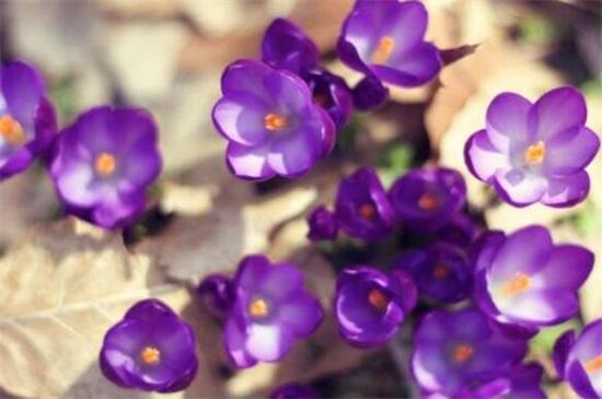 哪一种开淡紫色小花的植物好看,最好看的10种紫色小花