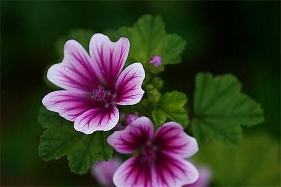 紫色分为哪几种紫,10种紫色花朵教你分辨深浅紫色