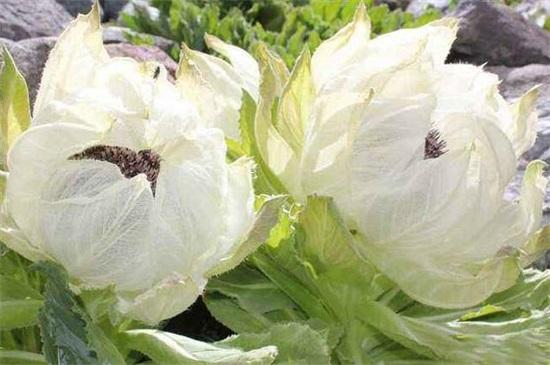 代表健康的花有哪些,盘点10种适合送给病人的花卉
