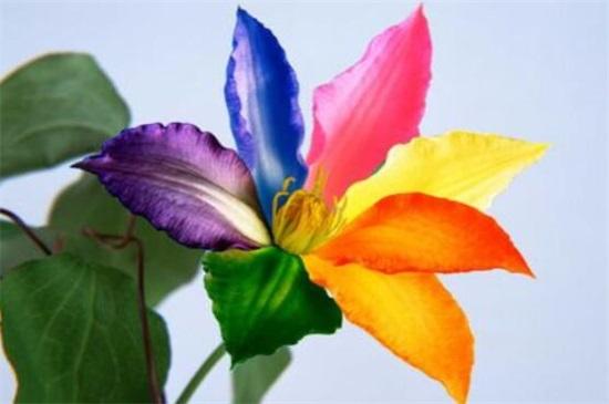 七色堇花语是什么,世界上有七色堇吗(没有)