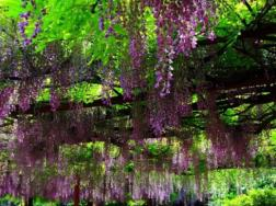 嘉定紫藤园几月份好看