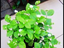 养花有什么好处:净化空气,增进健康