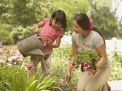 初学养花为什么要从学浇水开始