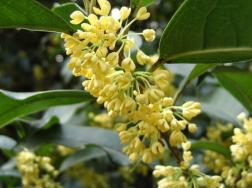 养花赏花对身心健康的好处