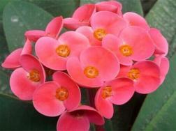一年四季都盛开的花是
