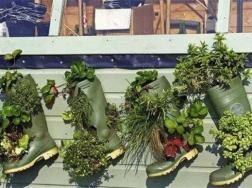 盘点植物角区域规则,6大规则将植物角养的郁郁葱葱